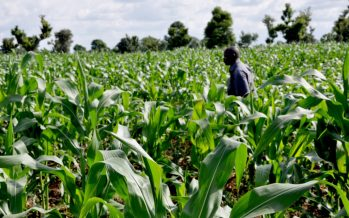 NACCIMA urges more support for agric sector