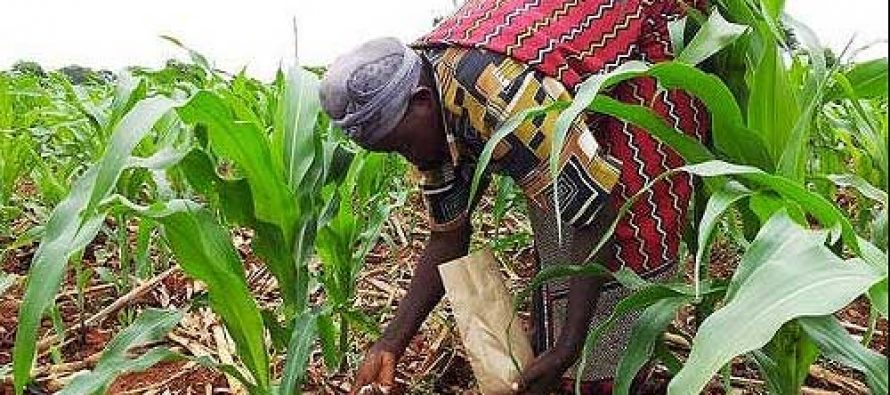 How Benue state reportedly used N807m to clear 3,750 hectares