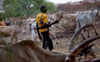 Herdsmen kill 100-year-old man, 2 others in Plateau