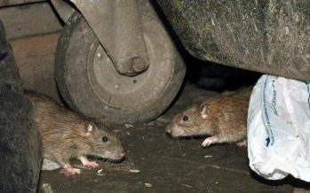 Lassa fever cases reported in 19 states