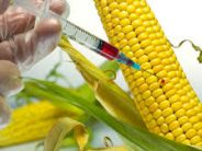 Mixed feelings as FG remains silent on controversial inflow of GMOs