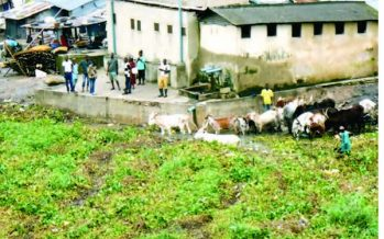 Ekiti court sentences herdsman to two years imprisonment for grazing