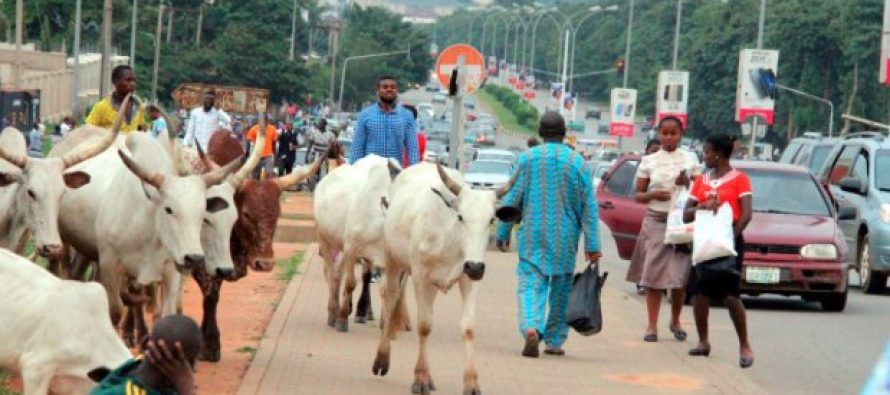 Herdsmen defy government's order to leave Abuja streets
