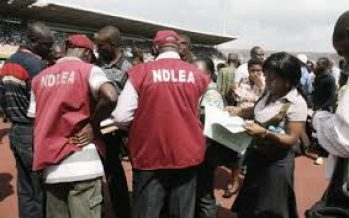 NDLEA arrests 19 IDPs for illegal drugs and sales in camps