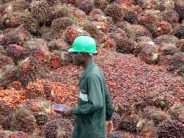 Malaysian 2017 palm oil output forecast to rise 12% – Report