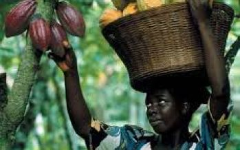 How 33,000 hectares of Cross River cocoa farmland were fraudulently ceded