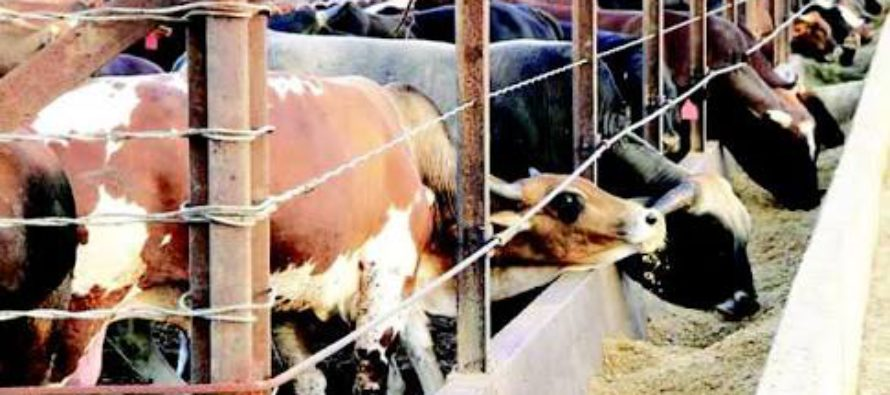 13 states agree with FG's cattle ranching, allocate 5,000 hectares