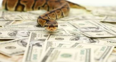 Nigerians react to mysterious snake that swallowed N36 million