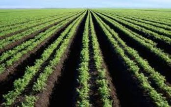 Rural Economy: FG, IFAD Collaborate On Agricultural Development