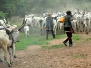 Fulani Group Calls On FG To Review Agriculture Policies
