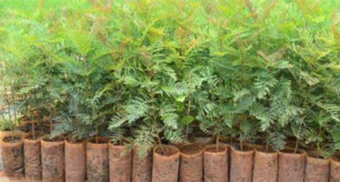 NIGTEQ President Embarks On Tree Planting
